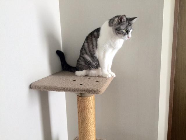 キャットタワー使うか使わないかは猫次第、購入前のチェック点