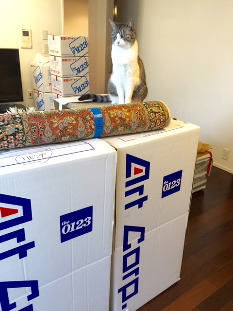 猫と一緒の引越しストレス軽減法