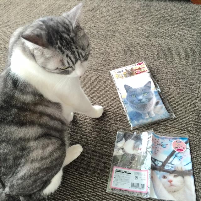 岩合さんの猫グッズ 郵便局にて購入