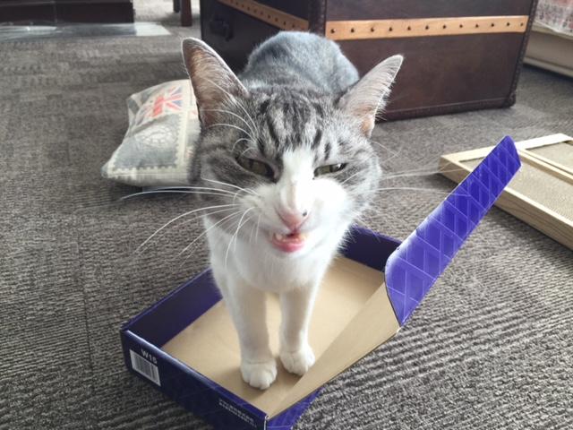 ハッピーハロウィン猫も一緒にコスプレして盛り上がる