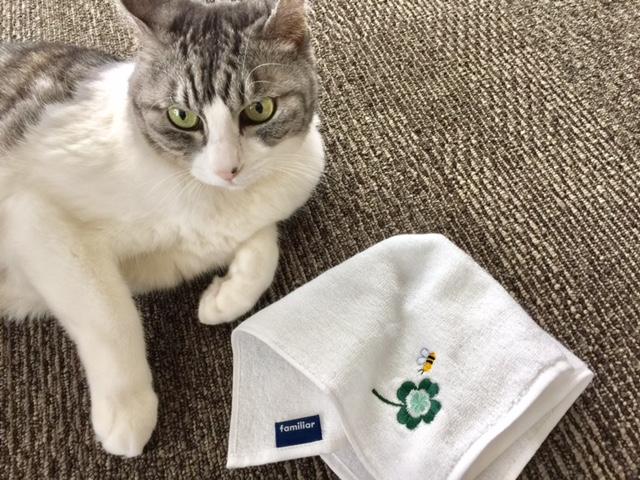 幸運のアイテム 猫と四つ葉のクローバーグッズ特集