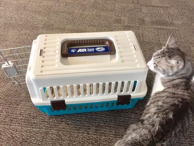 アイリスオーヤマのエアトラベルキャリーなら猫のお出かけ&通院も安心です