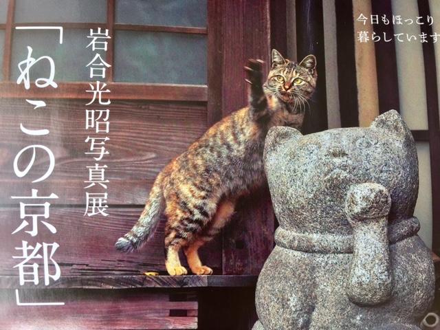 岩合さん「ねこの京都」写真展が日本橋三越・京都伊勢丹で開催