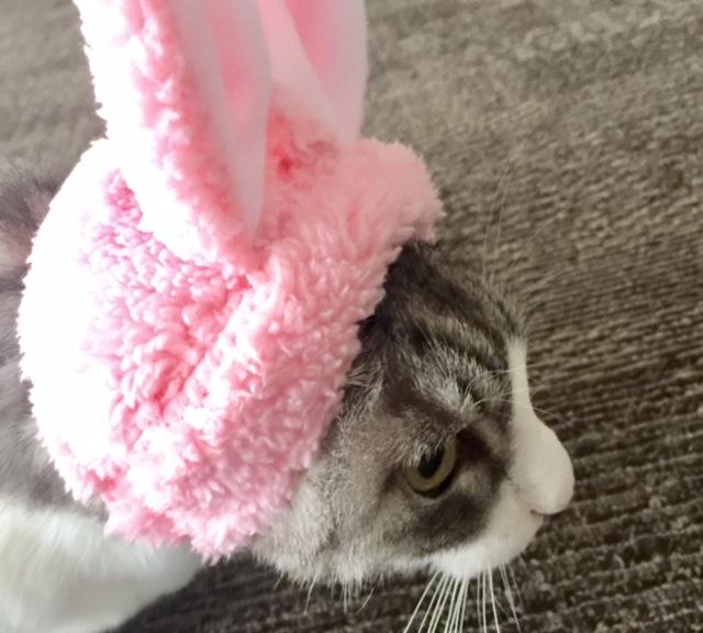 【かわいいかわいい ねこランド】猫のかぶりものガチャ常設コーナー登場
