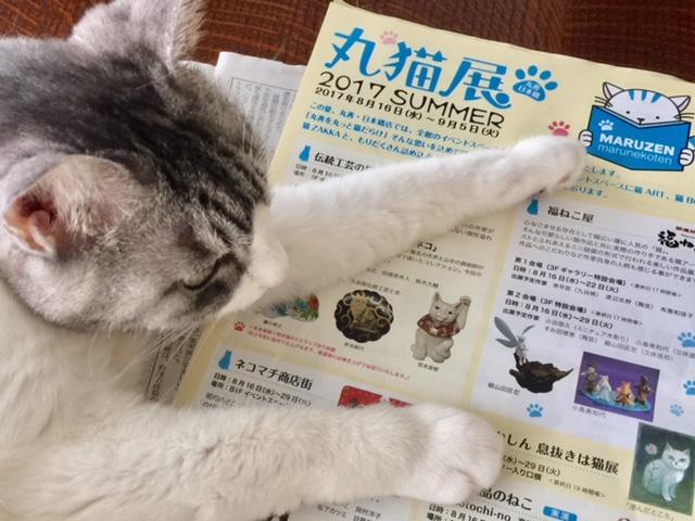 〈丸猫展 2017SUMMER〉丸善・日本橋店は丸っと猫だらけ!