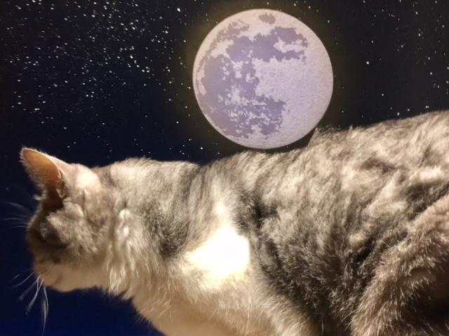 中秋の名月と猫と東京タワーと♪【2017・10・4】