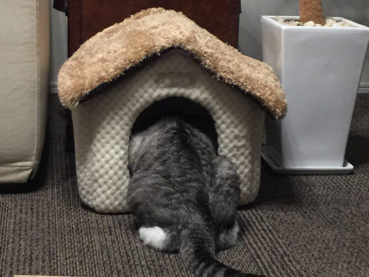 失敗しない!秋冬用の猫ベッド&猫ハウス選び方のポイント