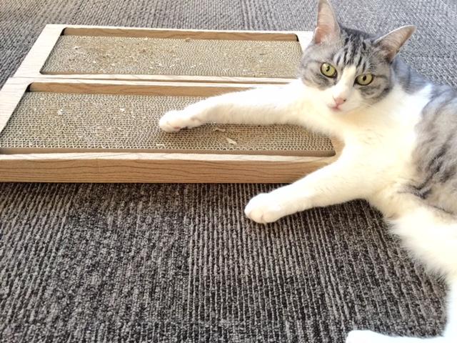 決め手は段ボールの目の粗さ。アイリスオーヤマの猫の爪とぎ