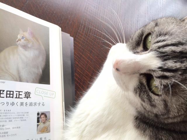 画家・疋田正章さんの描く静謐な猫たち