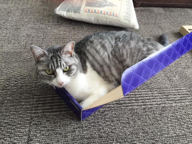 フェリシモ猫部さくさくニードルフェルトにゃんこの会、発売開始